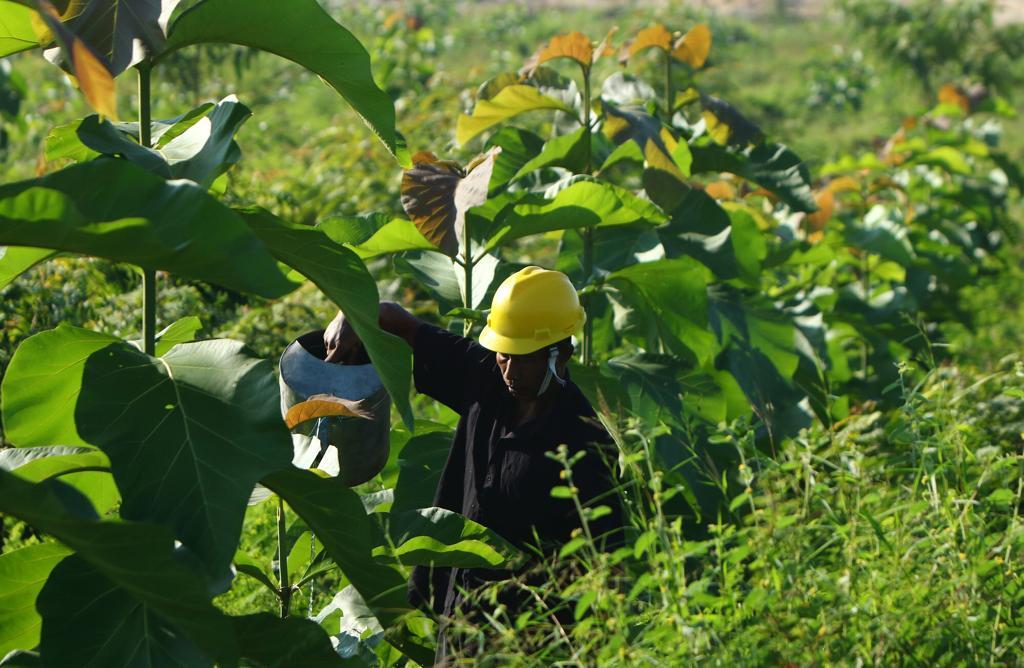 Reklamasi Lahan Pascatambang Batu Kapur SIG di Pabrik Tuban Berhasil Tingkatkan Kesuburan Tanah